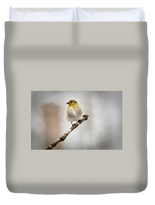 Cove Duvet Cover featuring the photograph American Golden Finch Winter Plumage 6 by Douglas Barnett