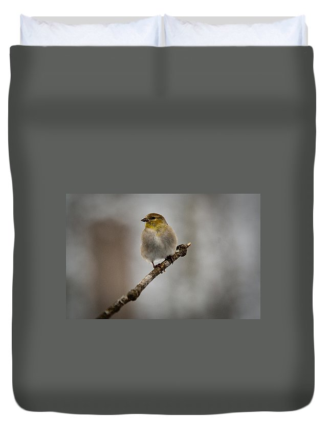 American Duvet Cover featuring the photograph American Golden Finch Winter Plumage by Douglas Barnett