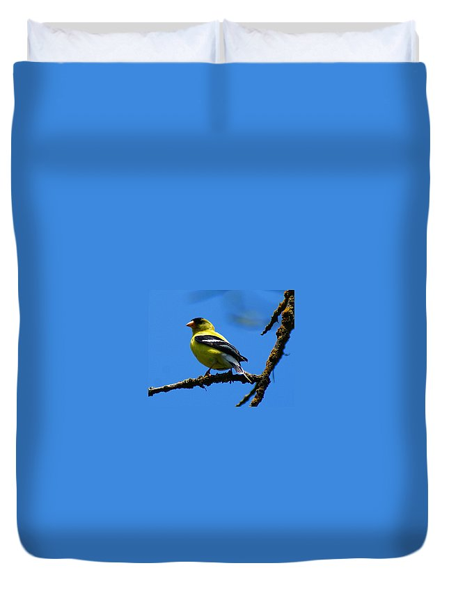 Birds Duvet Cover featuring the photograph American Goldfinch 1 by Ben Upham III