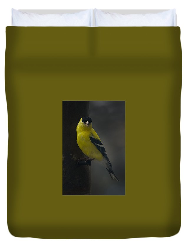 American Goldfinch Duvet Cover featuring the photograph American Goldfinch by David Hook