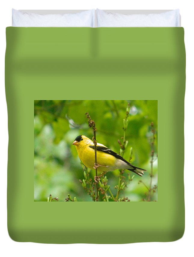 American Goldfinch Sittin' In A Tree Duvet Cover featuring the photograph American Goldfinch Sittin' In A Tree by Emmy Vickers