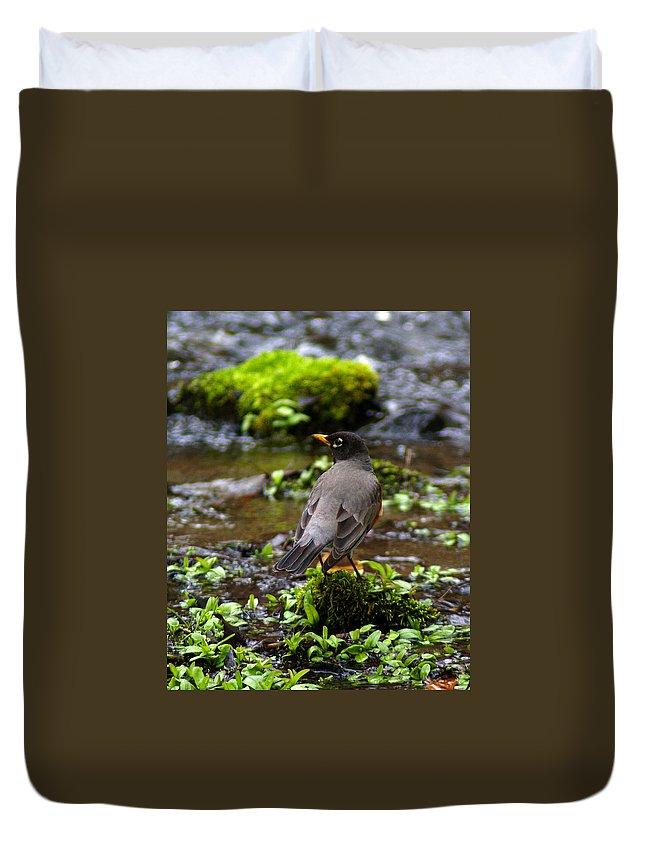 Birds Duvet Cover featuring the photograph American Robin In Garden Springs Creek by Ben Upham III