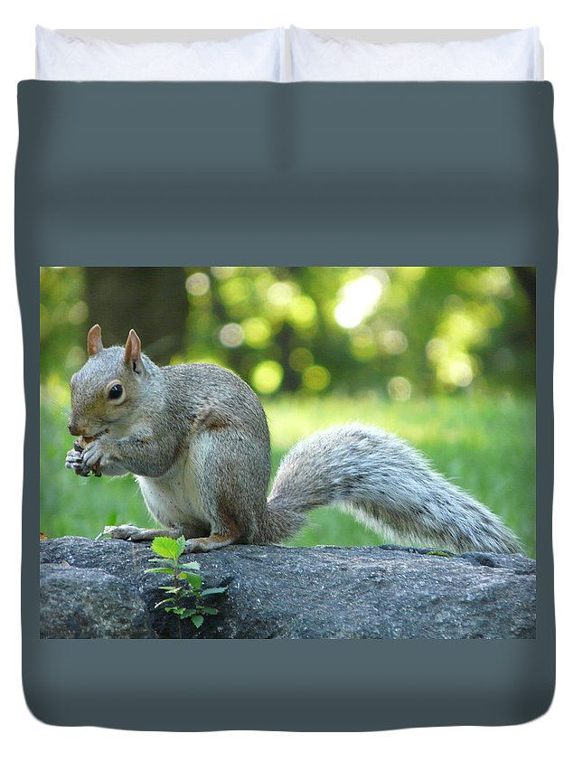 New York Duvet Cover featuring the photograph American Squirrel by Valerie Ornstein