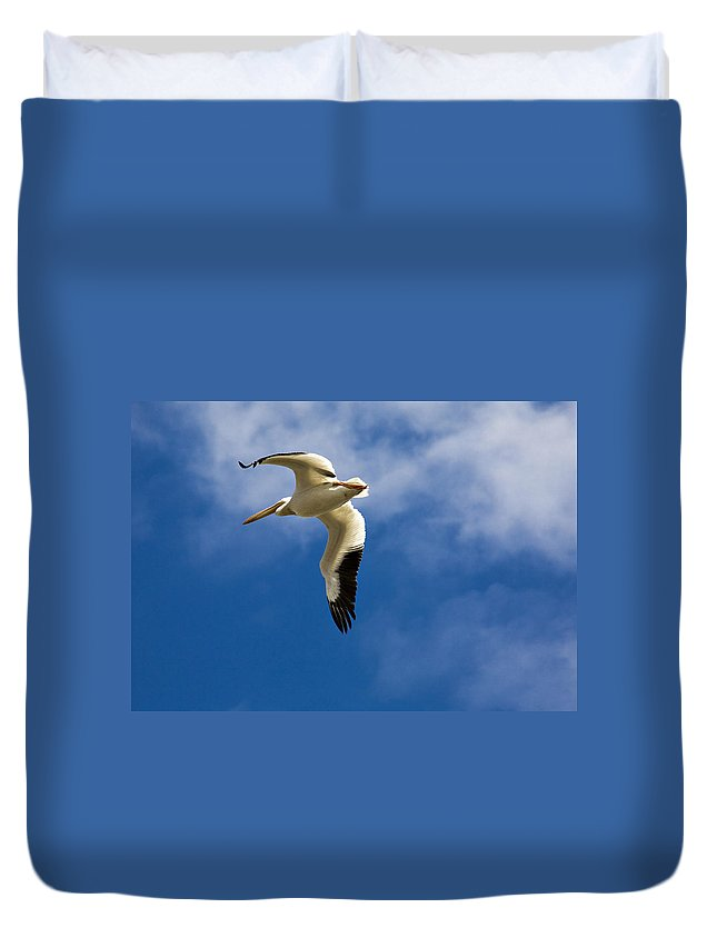 Bird Duvet Cover featuring the photograph American White Pelican In Flight by Marilyn Hunt