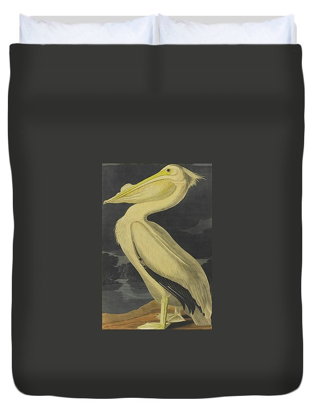 John James Audubon (after) American White Pelican (plate Cccxi) Duvet Cover featuring the painting American White Pelican by MotionAge Designs