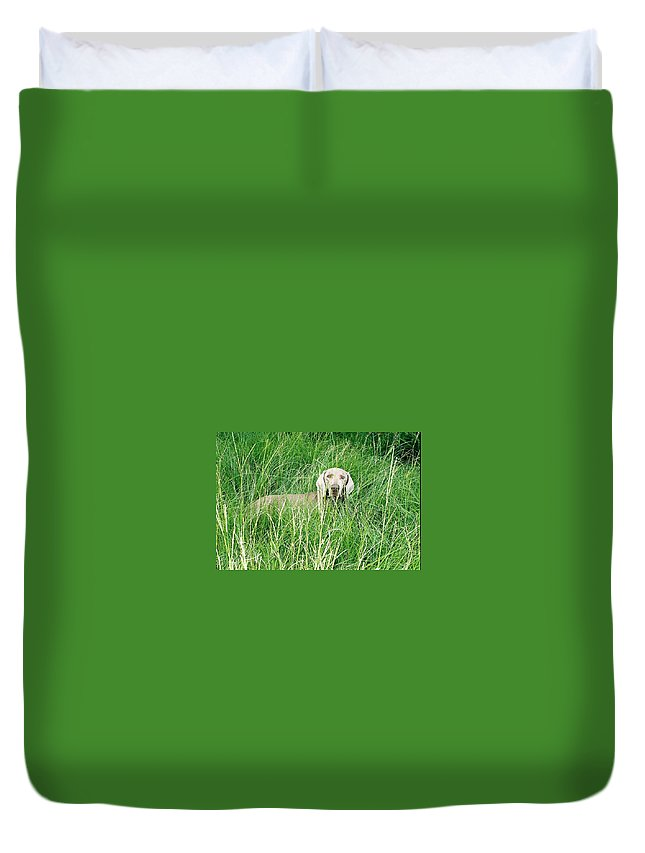 Grass Duvet Cover featuring the photograph Among The Grasses by Cindy New