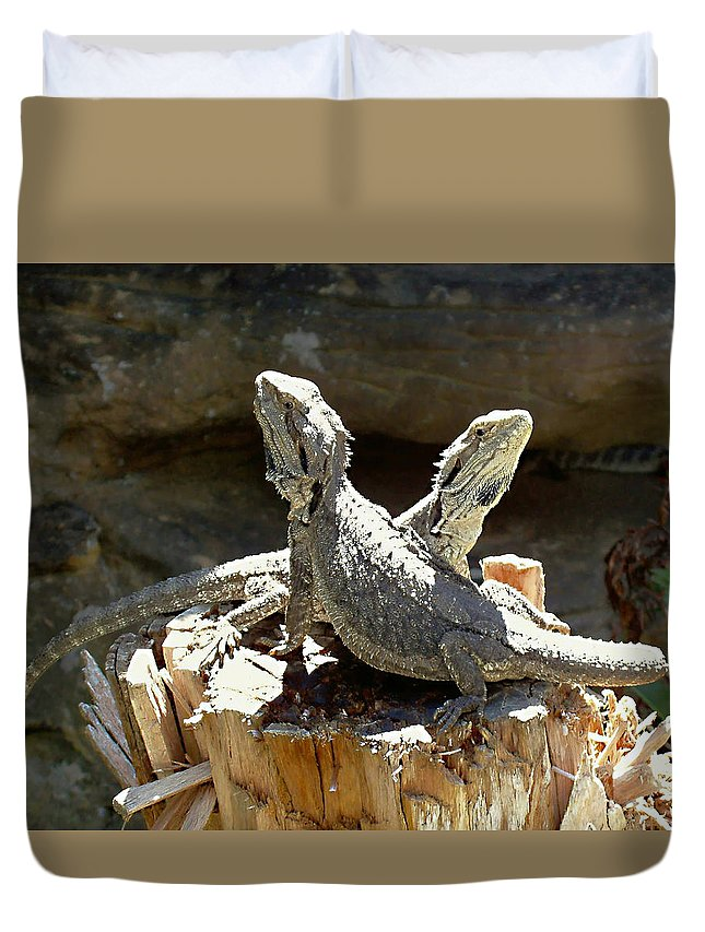 Amphion And Zethus Duvet Cover featuring the photograph Amphion And Zethus by Ellen Henneke