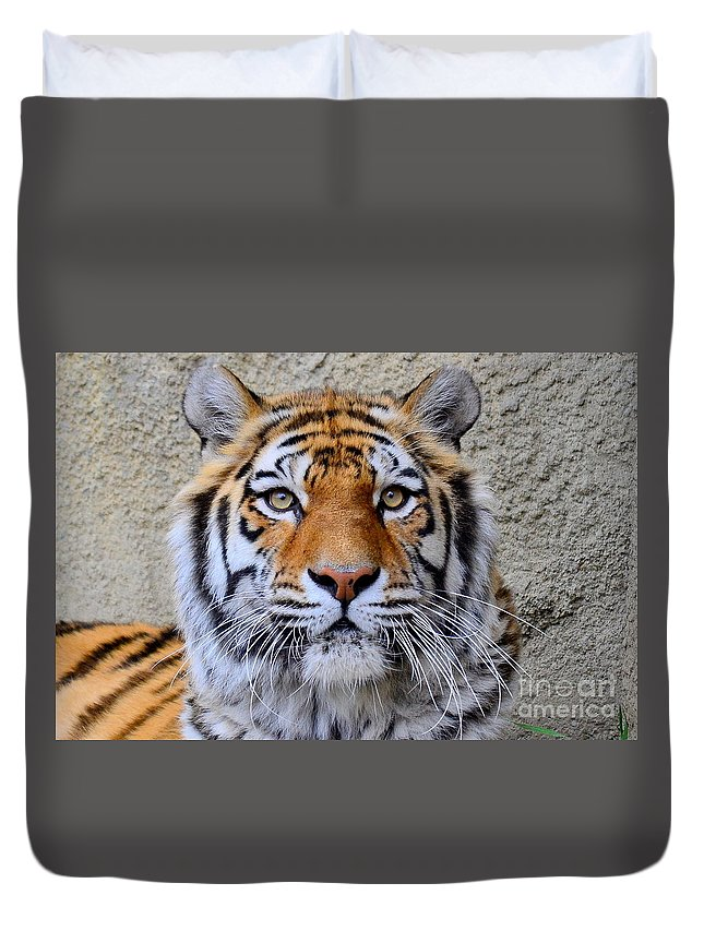 This Is A Photograph Of An Amur Tiger Duvet Cover featuring the photograph Amur Siberian Tiger by Jeffery Fannin