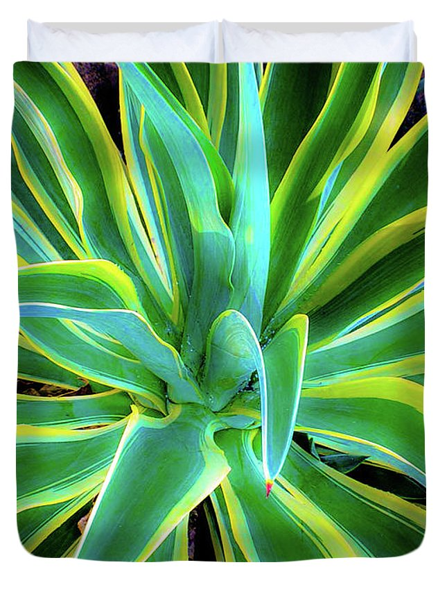 Agave Duvet Cover featuring the photograph An Agave In Color by D Davila