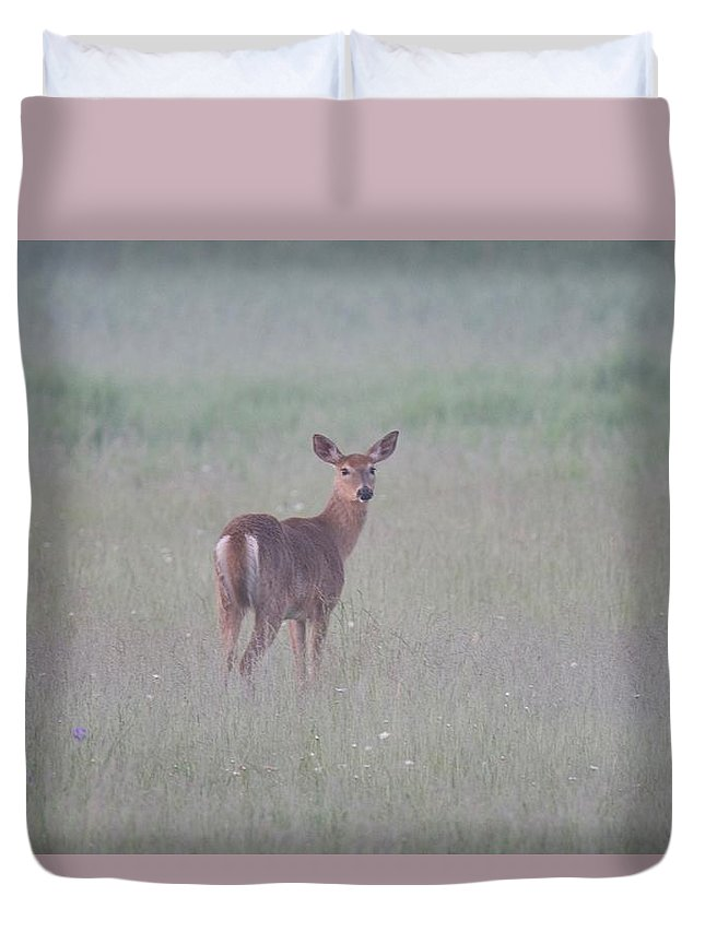 Deer Duvet Cover featuring the photograph An Early Summer Morning by Michael Peychich