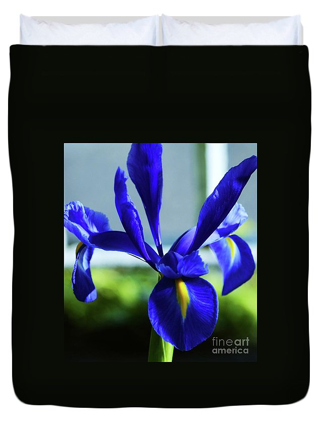 Floral Art Irish Flora Iris Purple Nature Close Up Outdoors Garden Minimal Image Flower Art Canvas Print Poster Print Metal Frame Available On T Shirts Phone Cases Mugs Duvet Covers Shower Curtains Tote Bags Greeting Cards And Throw Pillows Duvet Cover featuring the photograph An Irish Iris by Marcus Dagan
