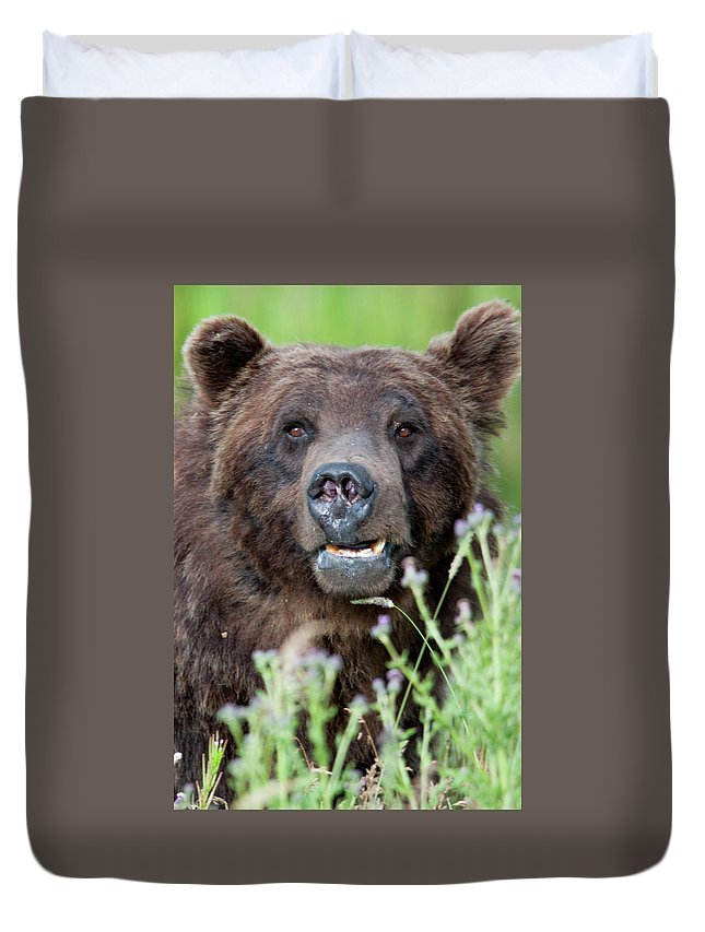 Wyoming Duvet Cover featuring the photograph An Old Bear Looking For a Meal by Frank Madia