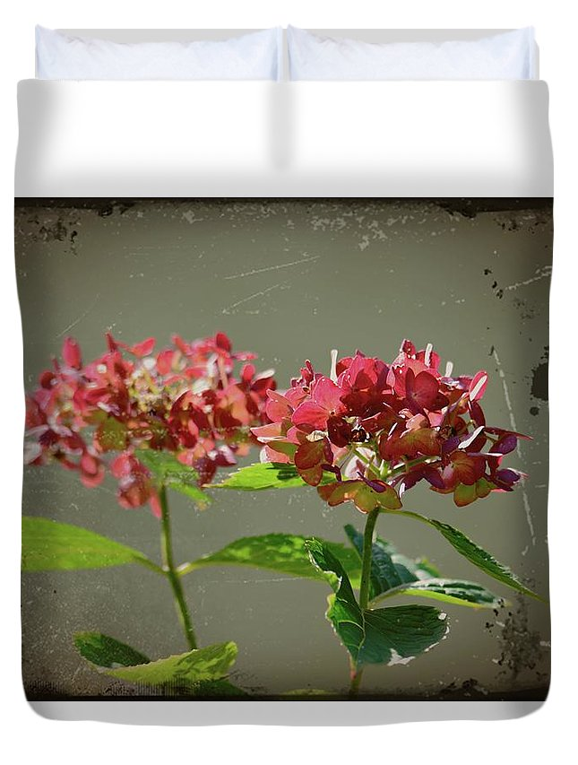 Antique Picture Of Flowers Duvet Cover featuring the photograph An Old Picture by Randy J Heath