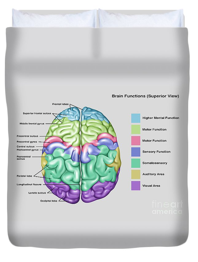 Anatomy & Functions Of Brain Duvet Cover for Sale by Gwen Shockey