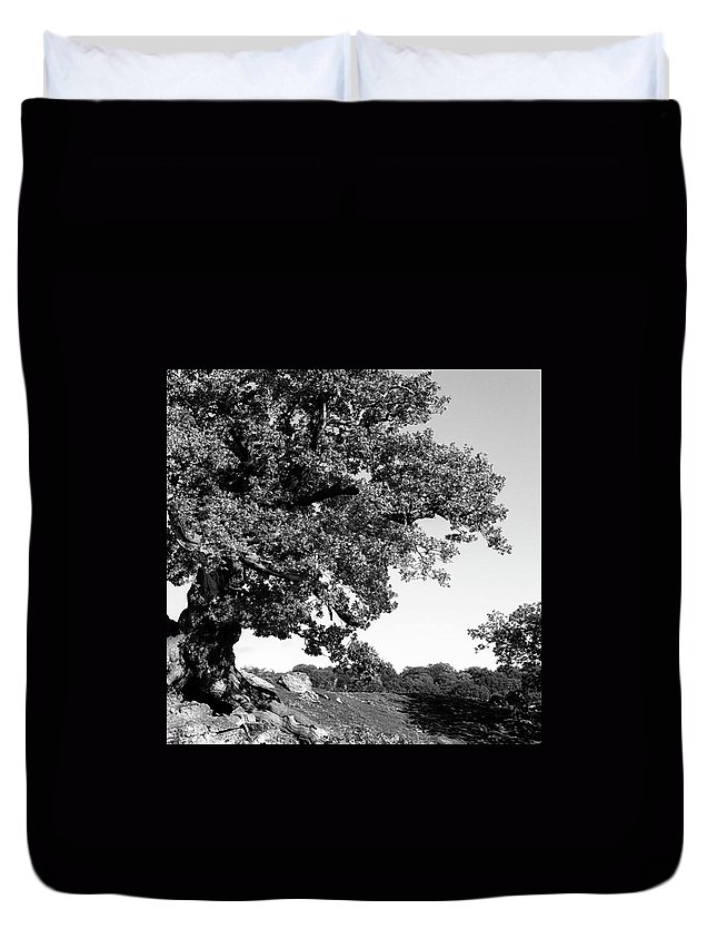 Woodland Duvet Cover featuring the photograph Ancient Oak, Bradgate Park by John Edwards