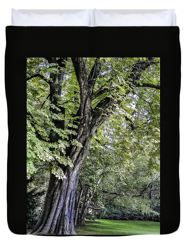 Tree Duvet Cover featuring the photograph Ancient Tree Luxembourg Gardens Paris by Sally Ross