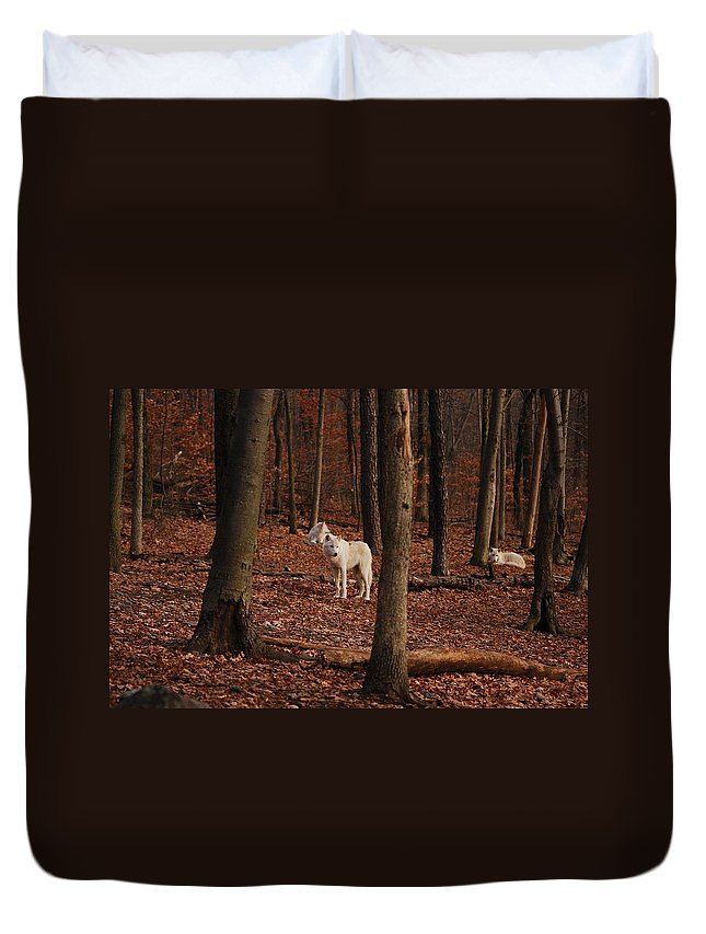 Wolf Duvet Cover featuring the photograph And Then There Were Three by Lori Tambakis