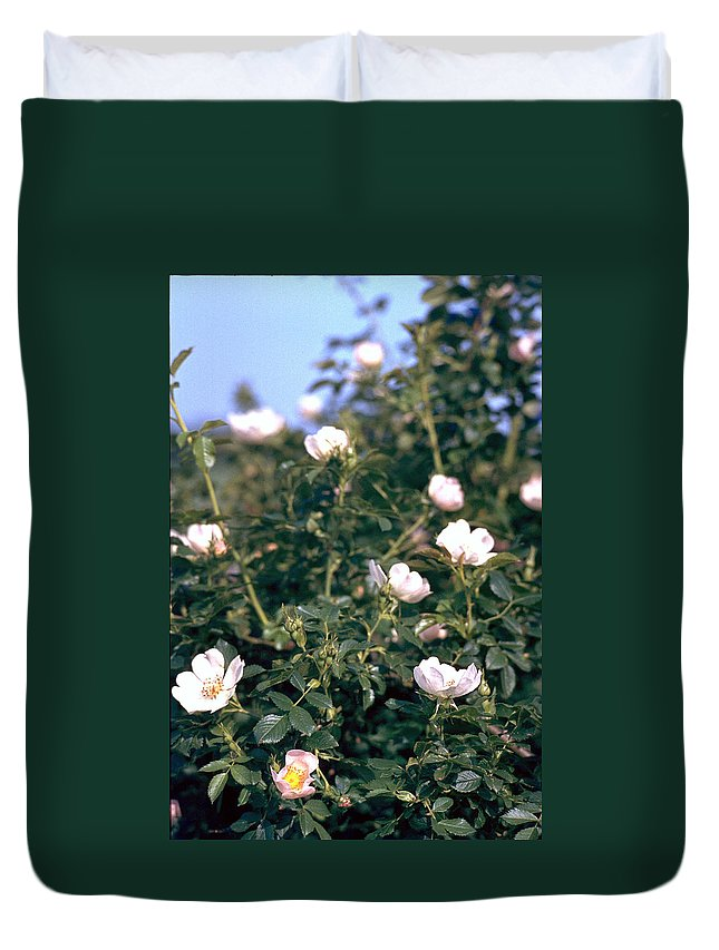 Anemone Duvet Cover featuring the photograph Anemone by Flavia Westerwelle