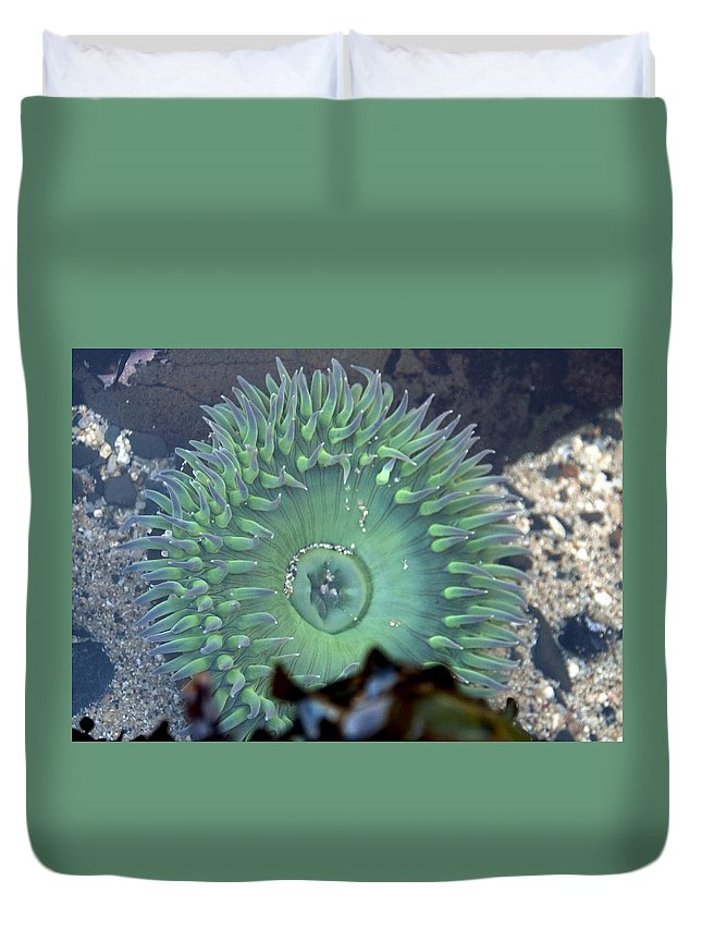 Anemone Duvet Cover featuring the photograph Anemone by Steven Natanson