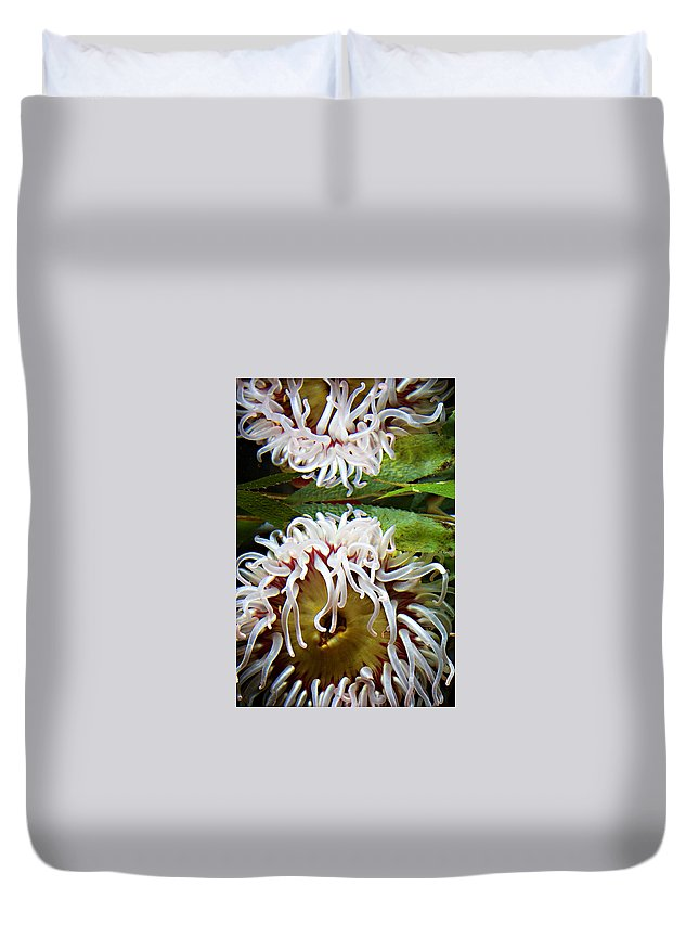 Aquarium Duvet Cover featuring the photograph Anenome Reflection by Marilyn Hunt