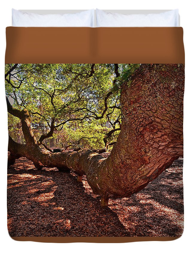 Angeloak Tree Duvet Cover featuring the photograph Angel Oak Tree 003 by George Bostian