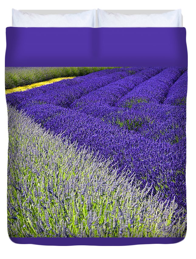 Lavender Duvet Cover featuring the photograph Angles In Lavender by Eggers Photography