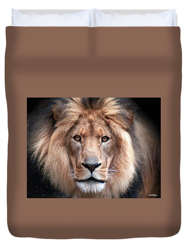 Lion Duvet Cover featuring the photograph Angry by Bill Stephens