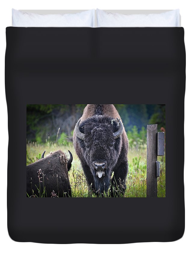 Yellowstone Duvet Cover featuring the photograph Angry Bison by Greg Norrell