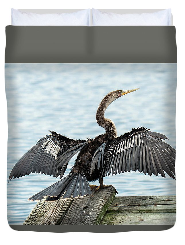 Anhinga Duvet Cover featuring the photograph Anhinga Drying Its Wings by David Ramage