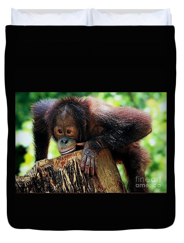 Animals Duvet Cover featuring the photograph Animals 3 by Ben Yassa