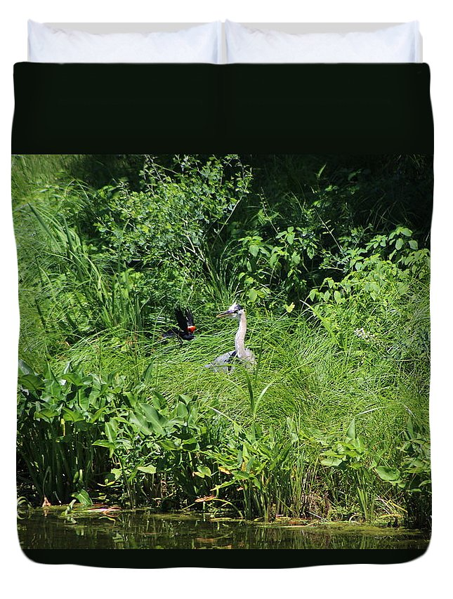 Marsh Duvet Cover featuring the photograph Annoyed - Heron and Red Winged Blackbird 5 of 10 by Colleen Cornelius