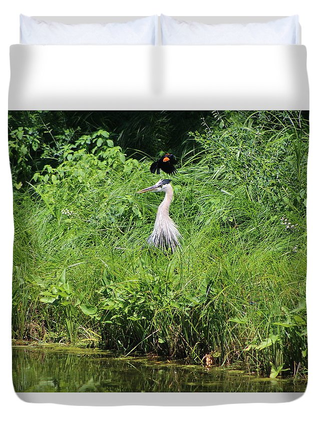 """Annoyed - Heron And Red Winged Blackbird 1 Of 10"" Photograph on Duvet"