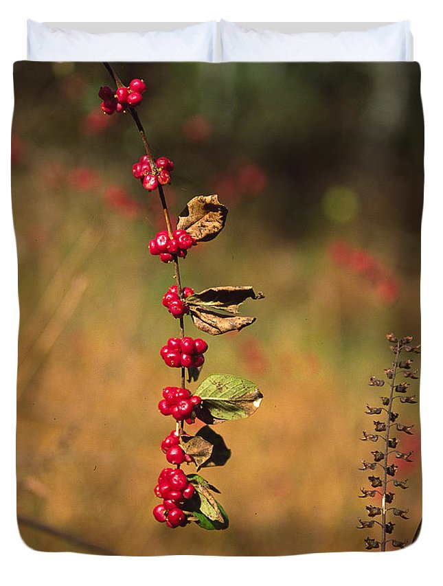 Fall Colors Duvet Cover featuring the photograph Another Year by Randy Oberg