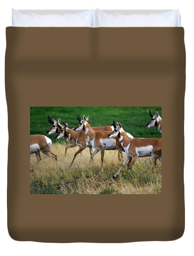 Wildlife Duvet Cover featuring the photograph Antelope 1 by Marty Koch