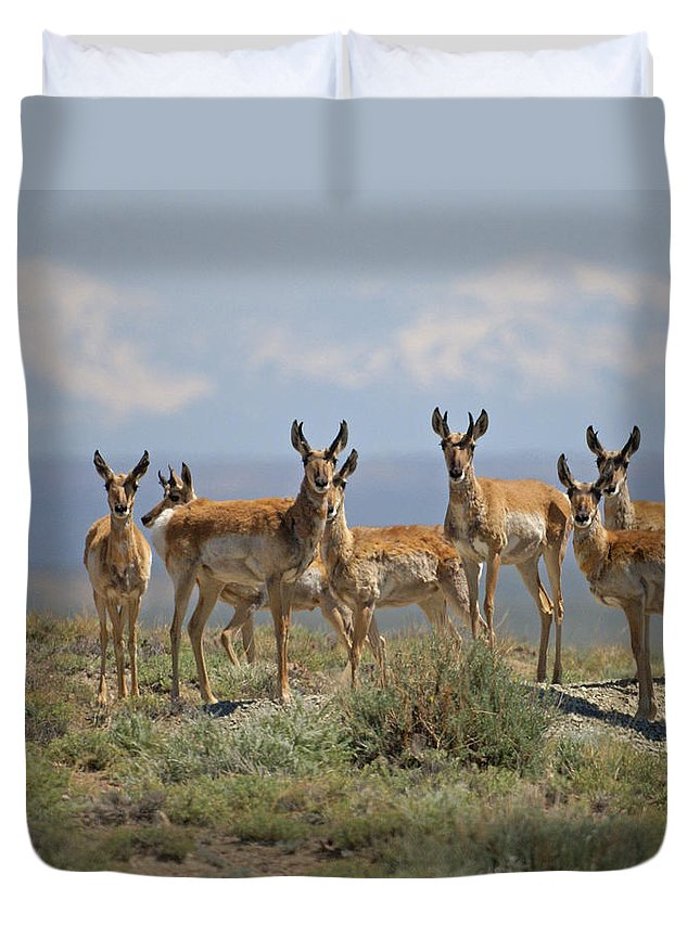 Antelope Duvet Cover featuring the photograph Antelope by Heather Coen
