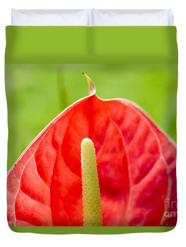 83-pfs0172 Duvet Cover featuring the photograph Anthurium Close-up by Ray Laskowitz - Printscapes