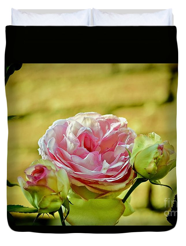 Rose Duvet Cover featuring the photograph Antique Pink Rose by Debra Banks