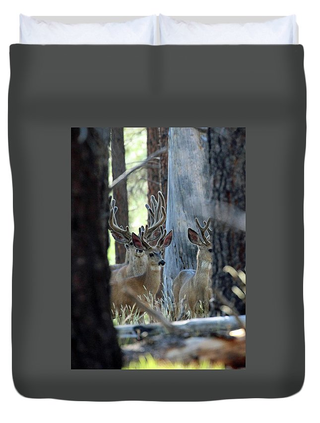 Animal Duvet Cover featuring the photograph Antlers Galore by Christina Boggs