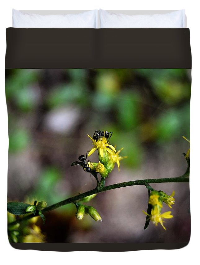 Ant Duvet Cover featuring the photograph Ants On A Flower by Hannah Tanner
