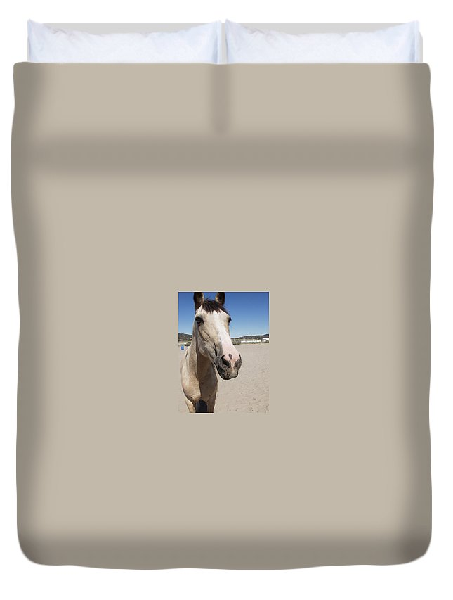 Horses Duvet Cover featuring the photograph Any Carrots by Jamey Balester