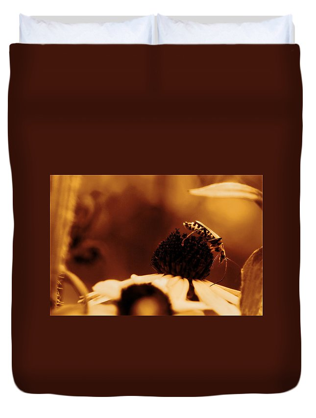 Leatherwing Duvet Cover featuring the photograph Anyone Else Down There - Gold Glow by Angela Rath