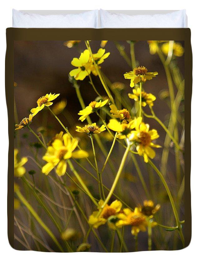 Desert Sunflower Duvet Cover featuring the photograph Anza Borrego Desert Sunflowers 1 by Chris Brannen