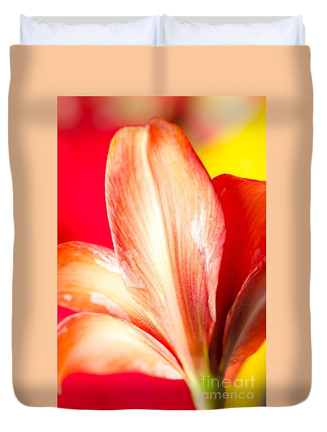 Amaryllis Duvet Cover featuring the photograph Apple Amaryllis Red Apple Amaryllis On A Pink And Yellow Background by Andy Smy