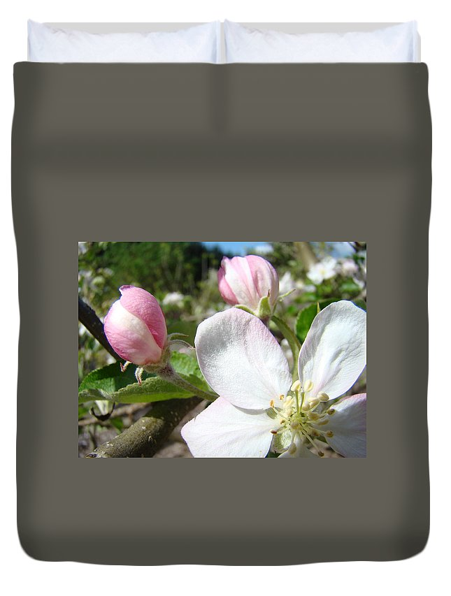 Apple Duvet Cover featuring the photograph Apple Blossom Artwork Spring Apple Tree Baslee Troutman by Baslee Troutman