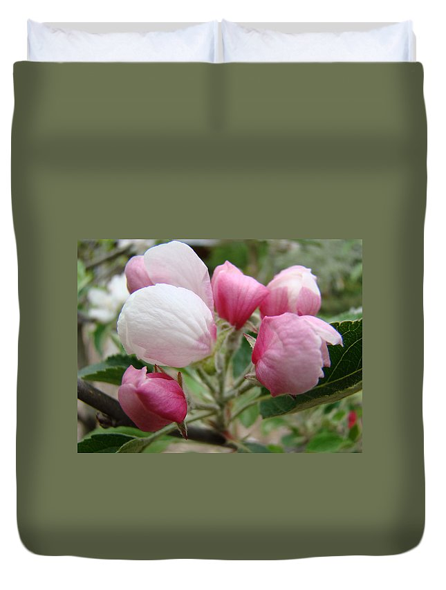 Apple Duvet Cover featuring the photograph Apple Blossom Buds Art Prints Spring Blossoms Baslee Troutman by Baslee Troutman
