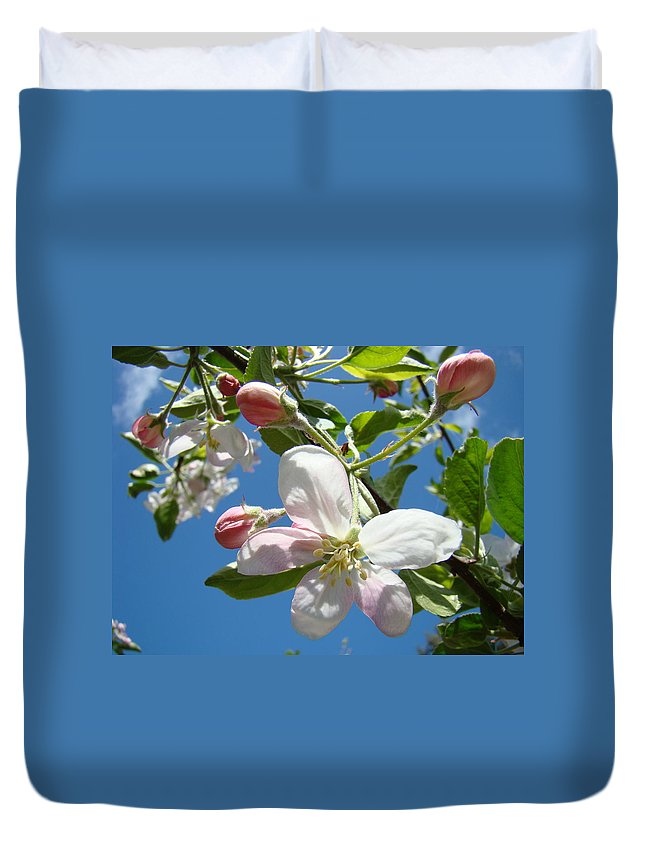 Apple Duvet Cover featuring the photograph Apple Blossoms Art Prints Blue Sky Spring Baslee Troutman by Baslee Troutman