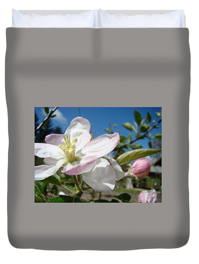 Apple Duvet Cover featuring the photograph Apple Blossoms Art Prints Canvas Blue Sky Pink White Blossoms by Baslee Troutman