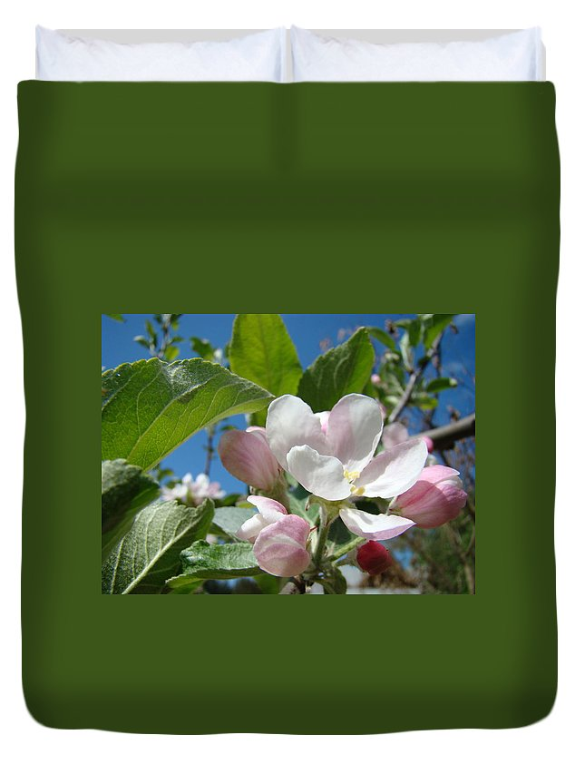Apple Duvet Cover featuring the photograph Apple Blossoms Art Prints Spring Apple Tree Baslee Troutman by Baslee Troutman