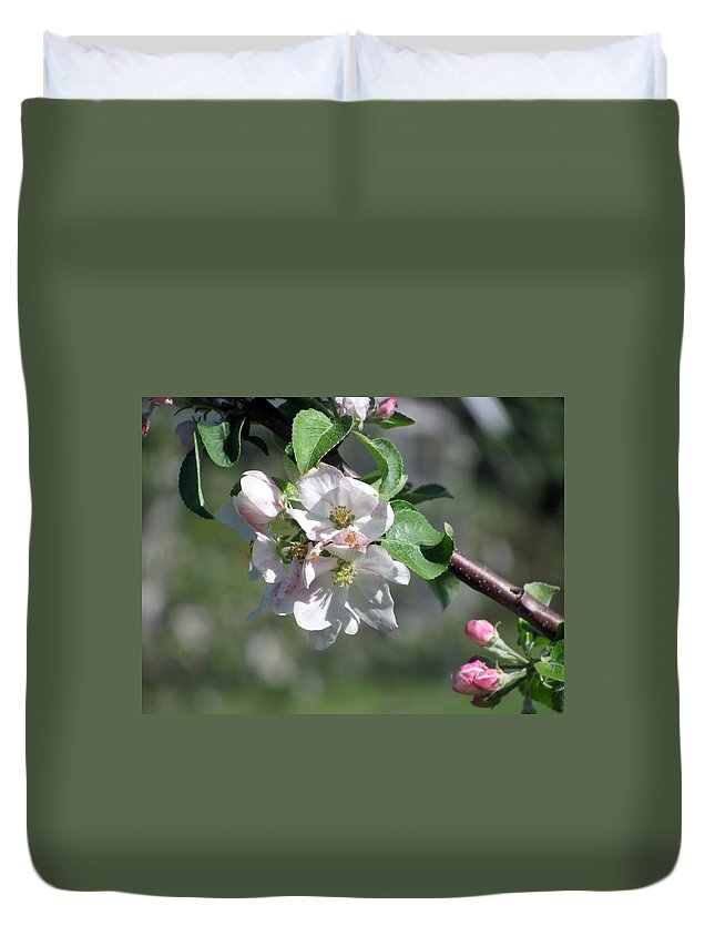 Apple Blossoms Duvet Cover featuring the photograph Apple Blossoms by Donna King