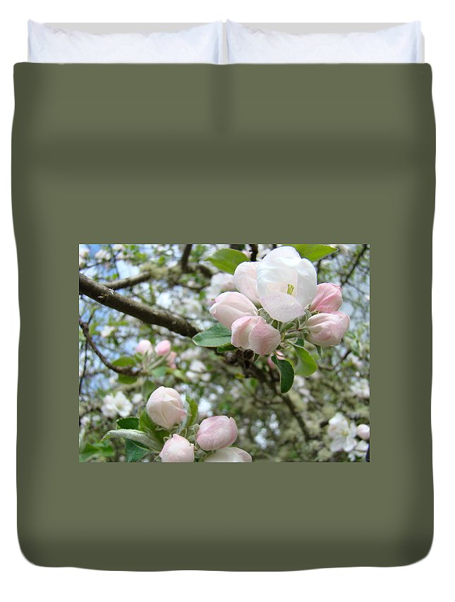 Apple Duvet Cover featuring the photograph Apple Tree Blossoms Art Prints Apple Blossom Buds Baslee Troutman by Baslee Troutman
